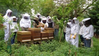 Formation à l'apiculture