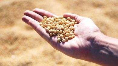 Atelier enfants : création d'un parchemin à semer + graines
