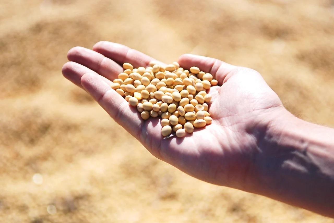 Atelier FSC graines semences parchemin